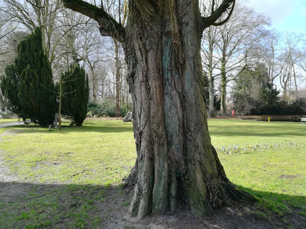 P8Lite Tree