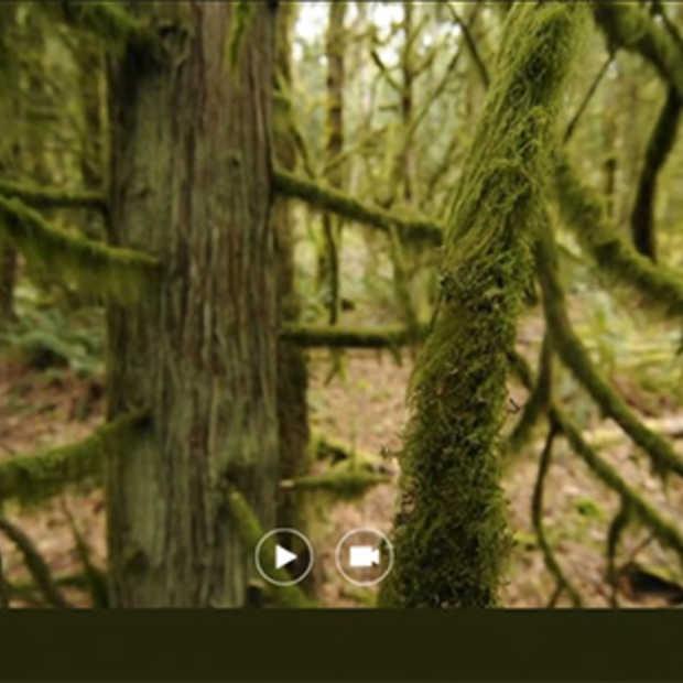 Exclusieve demo van Photosynth 3D op TED