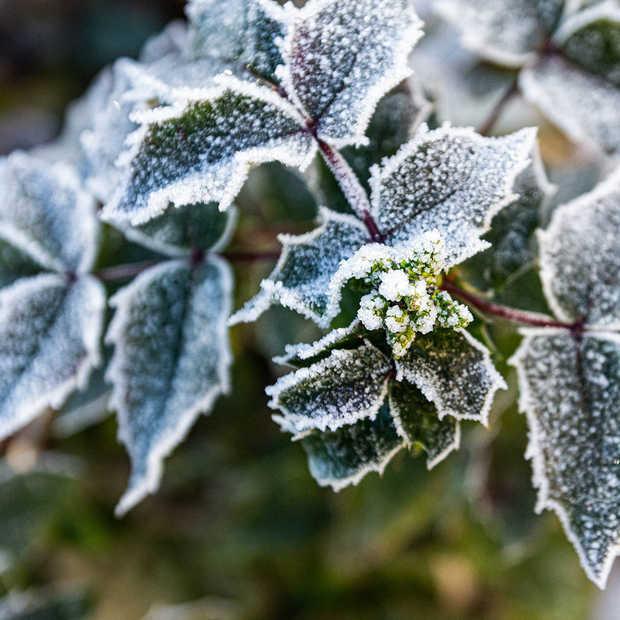 De 5 tuintrends voor de komende winter